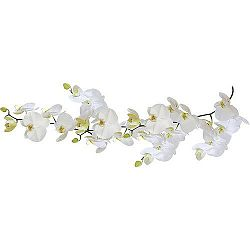 Samolepka Orchidej, Kliene Wolke